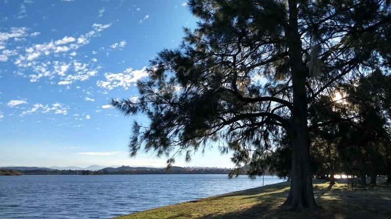 Canberra: laghetto artificiale, riva con albero