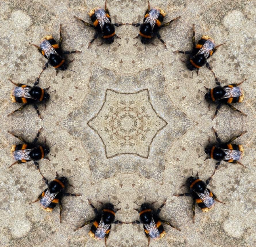 api caleidoscopiche