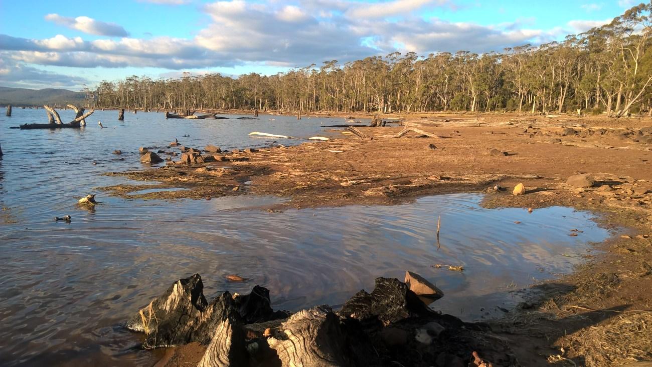 leake lake riva con alberi