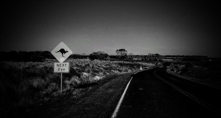segnale di pericolo canguri