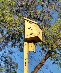 casetta-gialla-per-pipistrelli-bat-box