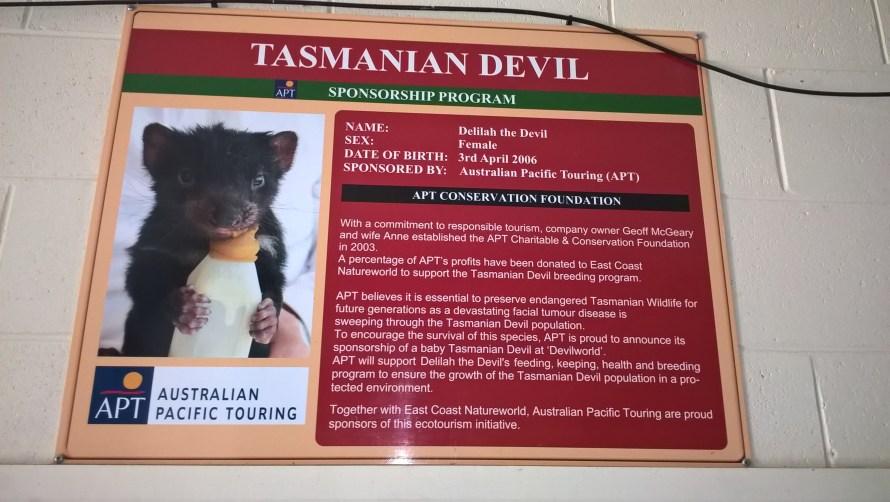 diavolo-della-tasmania-pannello-di-sponsorizzazione
