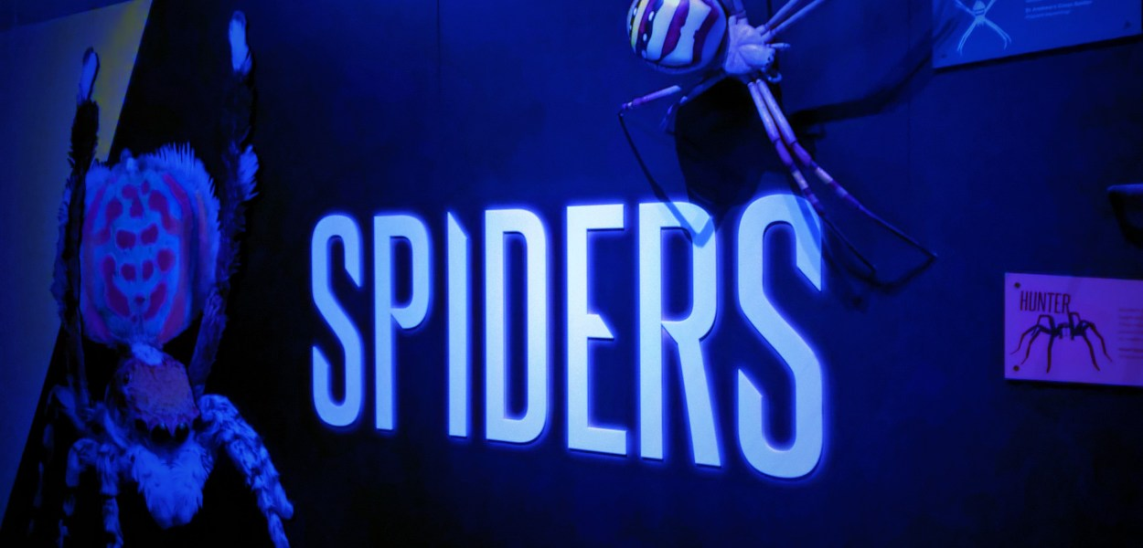 mostra-launceston-tasmania-spiders-ragni