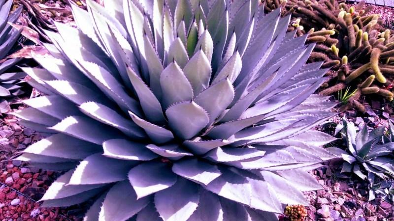 piante grasse 4
