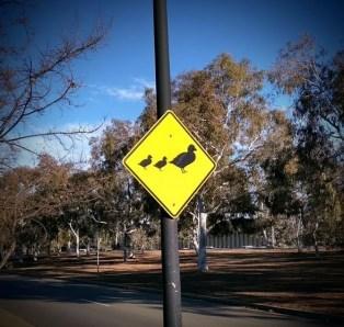 segnale-stradale-attraversamento-anitre