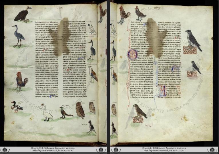 De Arte Venandi cum Avibus - pagine manoscritto con uccelli