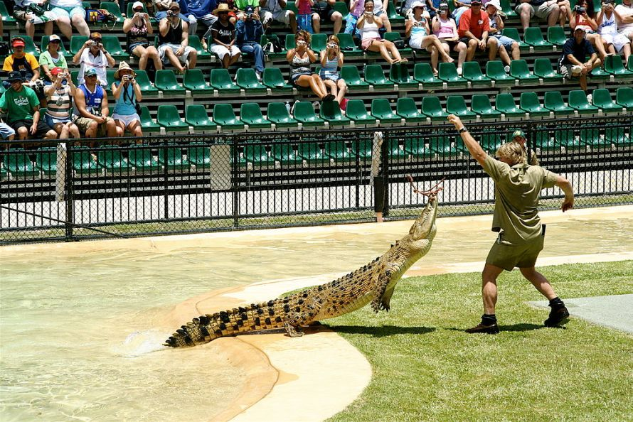 Steve-Irwin-nutre-coccodrillo-all-Australia-Zoo