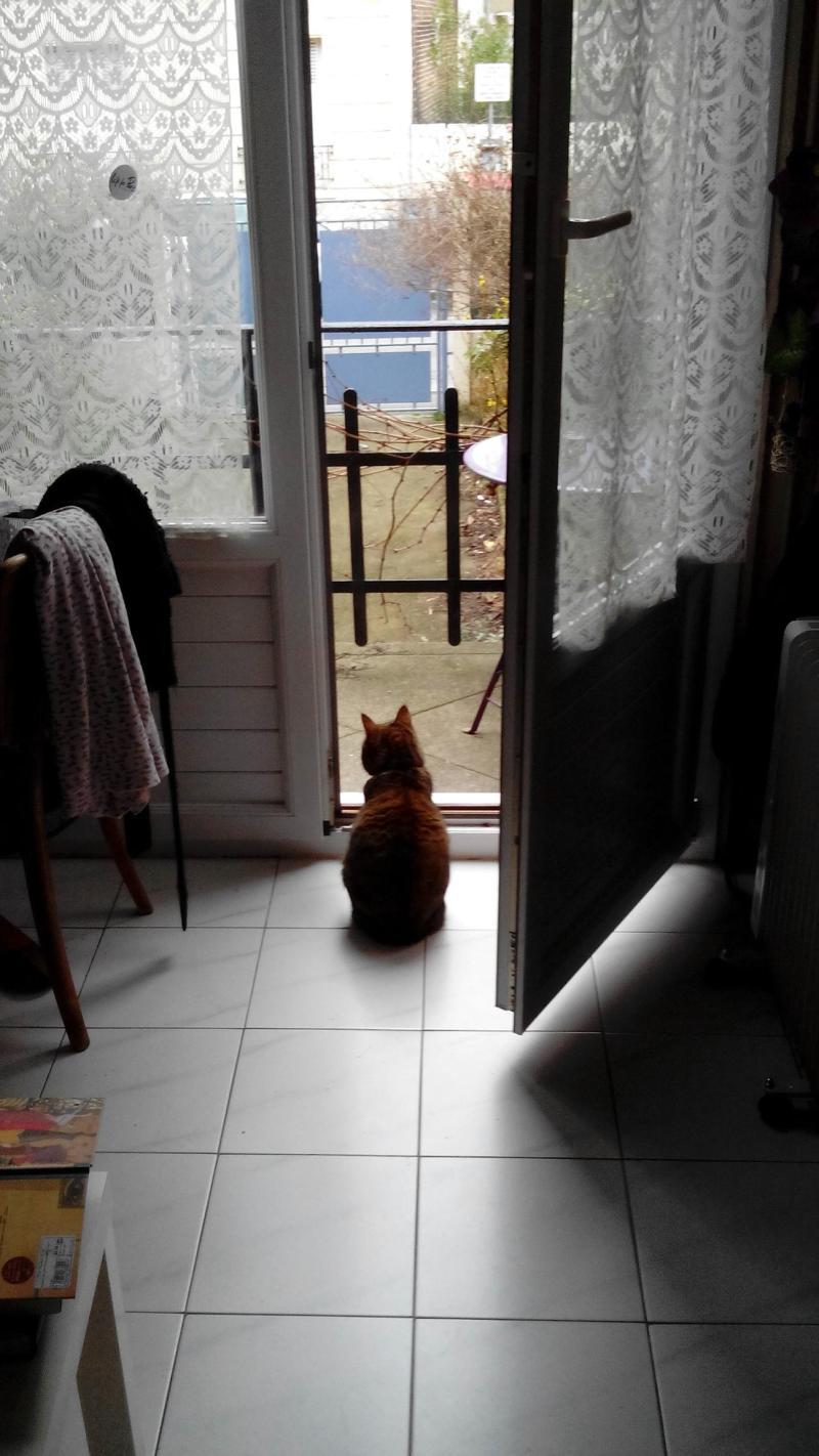 Storie di gatti: gatta di schiena che guarda fuori dal balcone
