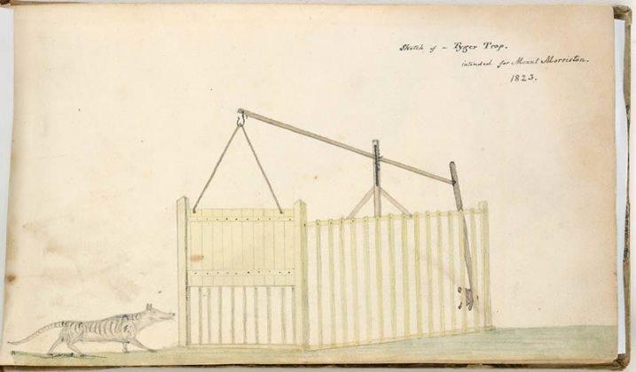 trappola per tilacino disegno