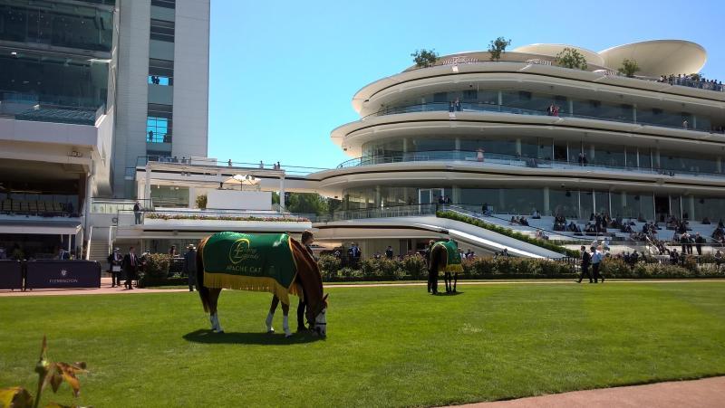 Cavallo con guadrappa alla Flemington Racecourse, l'ippodromo di Melbourne