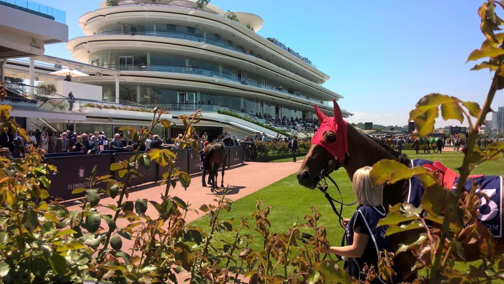 cavallo con copricapo rosso inquietante alle corse di cavalli di melbourne