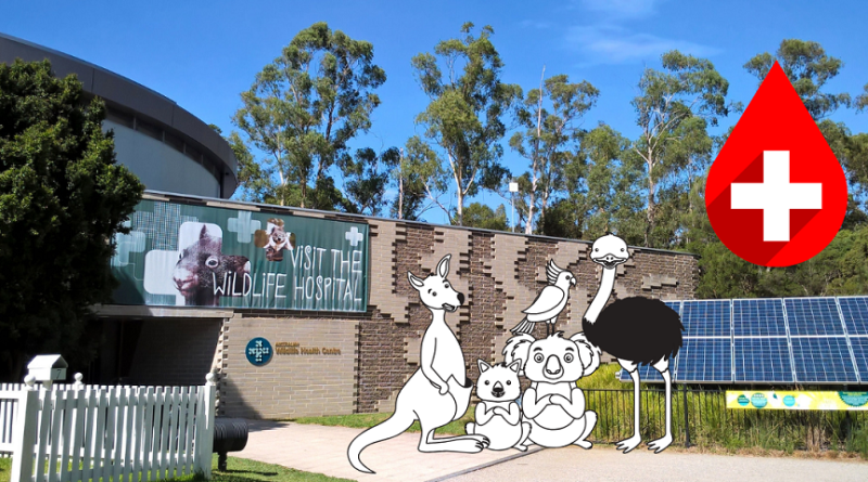 ospedale per animali selvatici healesville wildlife hospital