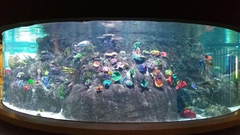 Acquario di Melbourne: vasca oceanica, la bellezza della natura marina