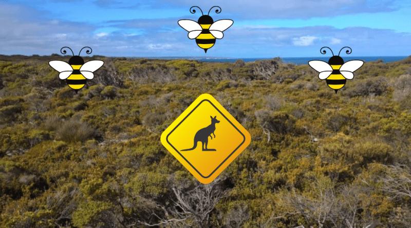 kangaroo island cosa vedere