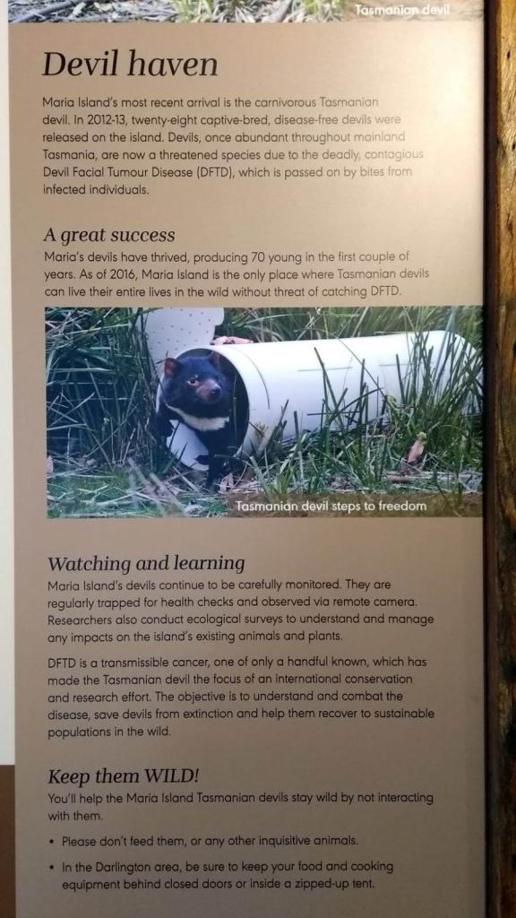 diavoli della Tasmania a Maria Island: pannello informativo