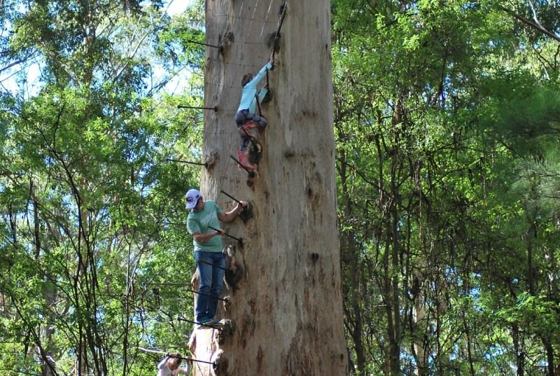 adulto e bambina che si arrampicano sul tronco di un albero a pioli