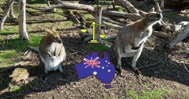 Vivere in Australia, pro e contro e due canguri