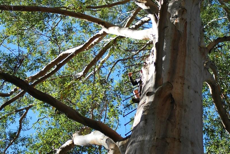 Pazzo che si arrampica su un albero a gradini