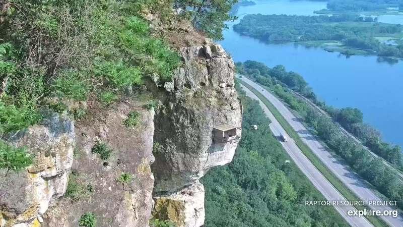 webcam animali in diretta: casetta dei falchi sul Mississippi