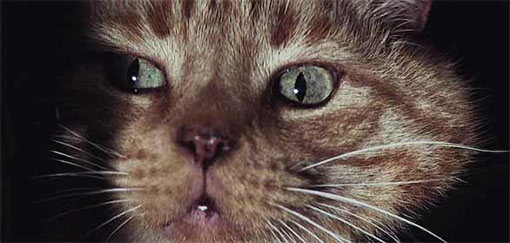 Jounesy, el gatito de Aliens