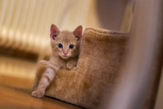 Kattunge Kattkommande Syd - Ludwig Sörmlind