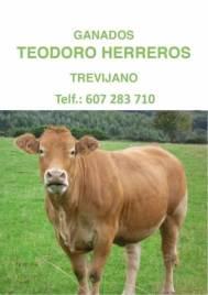 teodoro herreros ok (Large)