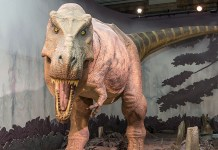 Vídeo Los Dinosaurios del Science Museum - Londres
