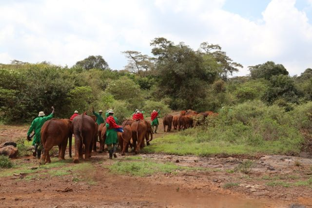 https://i2.wp.com/lugaresepasseios.com.br/wp-content/uploads/2014/05/quenia-david-sheldrick-wildlife-trust-nursery-04.jpg