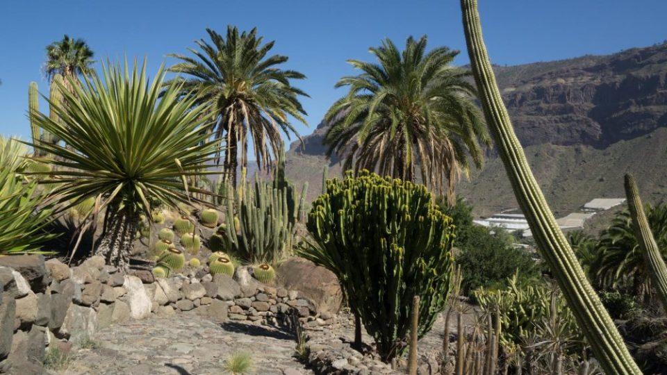 Cactusaldea, el parque de jardines de España con más cactus