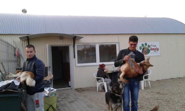 """Lugoj Expres """"Free Amely"""", la Coșteiu: sterilizări/castrări gratuite pentru câini și pisici Traian Vuia Știuca sterilizări pisici Peta Germania Lugoj gratuit Găvojdia Free Amely 2007 Eduxanima Coșteiu castrări campanie câini Boldur Asociația Free Amely 2007 Lugoj animale"""