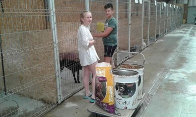 Lugoj Expres Voluntari la 14 ani! Doi adolescenți au renunțat la vacanță pentru a ajuta animalele voluntariat iubitori de animale exemplu Asociația Free Amely 2007 Lugoj adolescenți adăpostul de câini