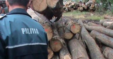 Lugoj Expres Doi angajați ai Ocolului Silvic Lugoj, audiați de polițiști după ce au emis avize false șantaj percheziții Ocolul Silvic Lugoj material lemnos Districtul Silvic Leucușești descinderi cercetări audieri abuz în serviciu