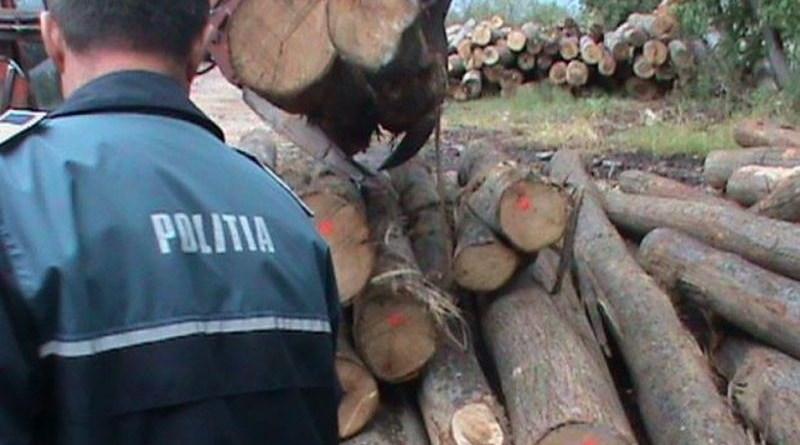 Lugoj Expres Pădurar cercetat pentru furt. A fost prins cu lemne fără documente transport Tomești Polițiști pădurar material lemnos lemne furt Făget dosar penal documente delapidare Curtea control