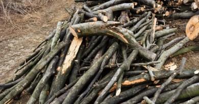 Lugoj Expres Bărbat care tăia ilegal material lemnos, prins de jandarmi tăieri ilegale Oloșag material lemnos Lugoj lemne jandarmi fondul forestier