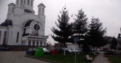 Lugoj Expres Marea defrișare! 500 de arbori, din specia pin, vor fi tăiați de pe domeniul public pin marea defrișare Lugoj domeniul public defrișare arbori arbbori tăiați