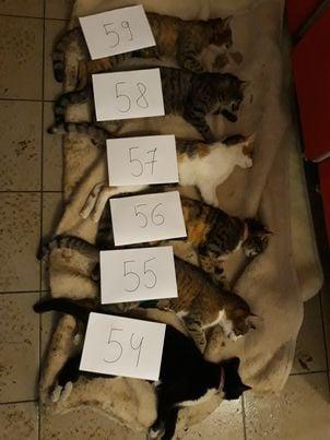 """Lugoj Expres Asociația """"Free Amely 2007"""" a castrat/sterilizat gratuit 120 de câini și pisici sterilizare pisici Lugoj castrare gratuită campanie câini Asociația """"Free Amely 2007"""" adăpostul de câini"""
