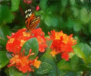 Ms. Butterfly