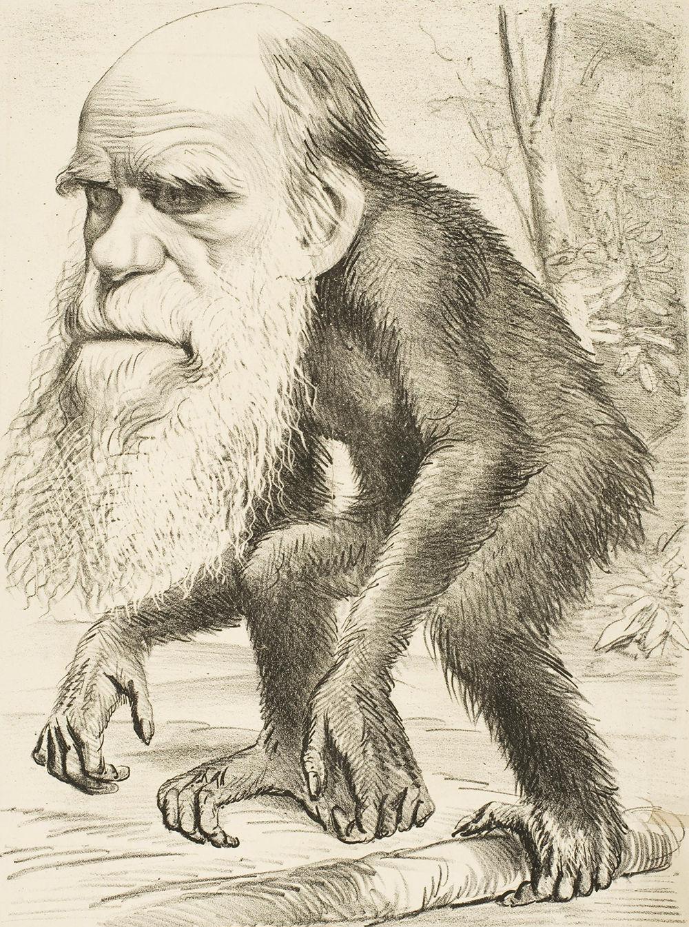 Caricatura de Charles Darwin publicada en la revista satírica The Hornet.