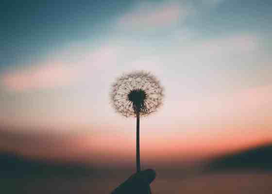 Ejercicio de gratitud diaria 7