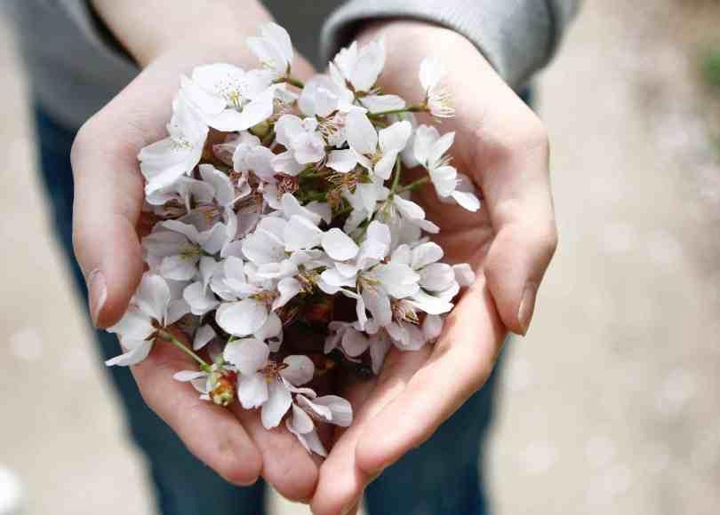 Beneficios del voluntariado: por el crecimiento de otros y el propio 1