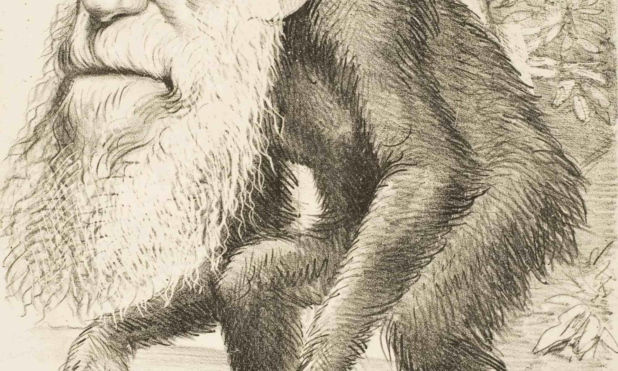 ▷ Formas de selección natural (muy políticamente incorrecto) 1
