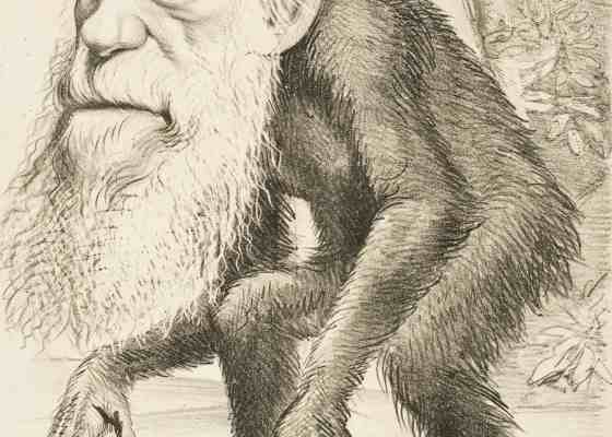 ▷ Formas de selección natural (muy políticamente incorrecto) 19