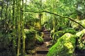 El laberinto de Nebias es un santuario natural impresionante donde habitan seres de elevada vibración .