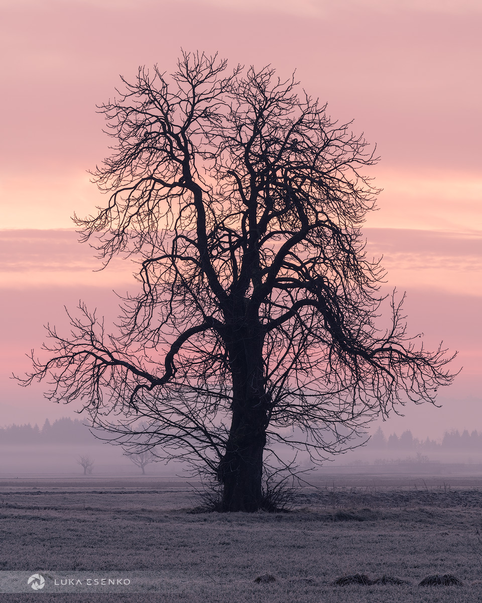 Silhouetted tree in winter, Slovenia