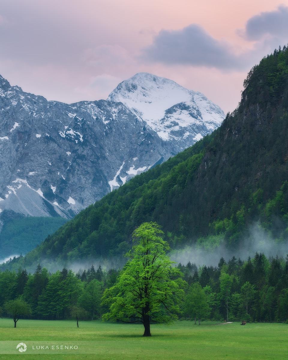Logarska valley in spring