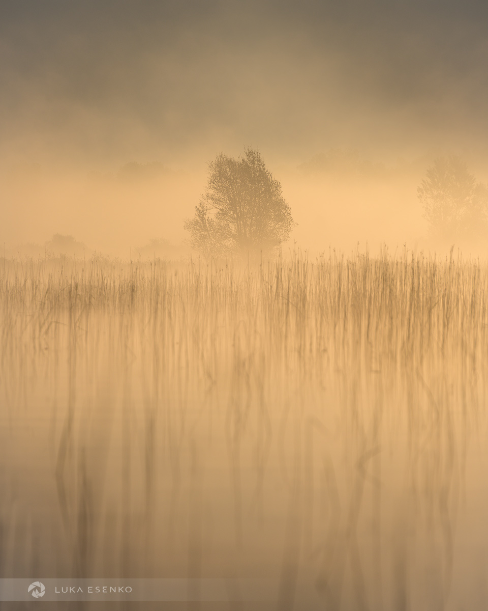 Misty Lake Cerknica