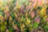 bunte Heidelbeerblätter