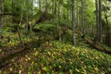 Urwald von Perucica