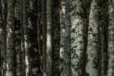 NP Biogradska Gora