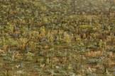 Brachfläche mit Kugeldisteln